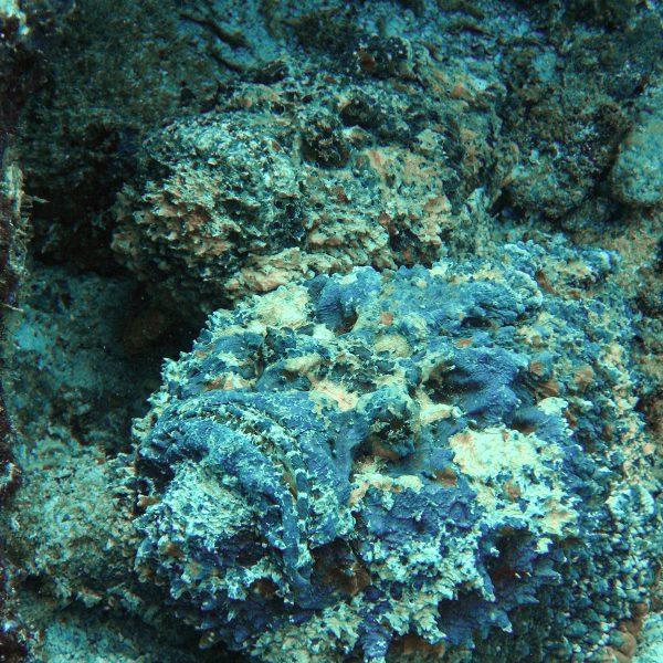 Seychellen_Steinfische